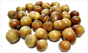 웅부도토리묵은 국산 도토리만을 사용합니다.